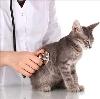 Ветеринарные клиники в Архаре